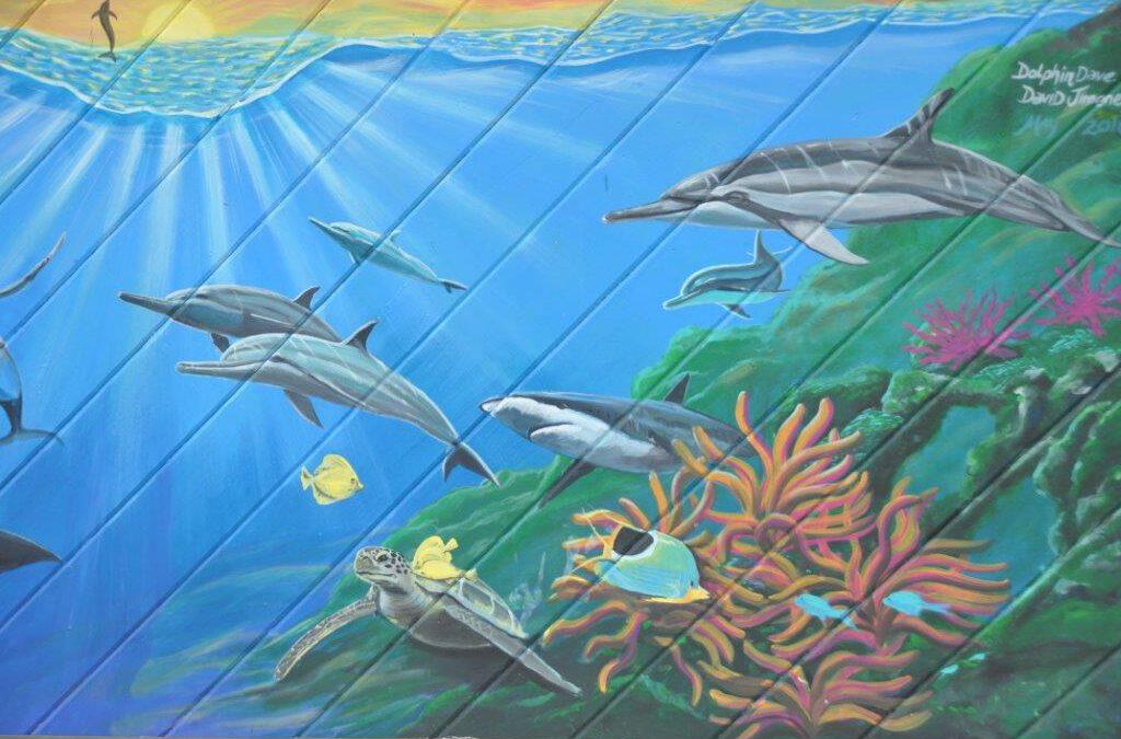 Delfin Quickies – Der kleine Unterschied