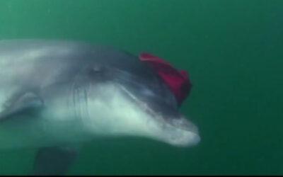 Delfin Quickies – Neugier, Verspieltheit, Spaß