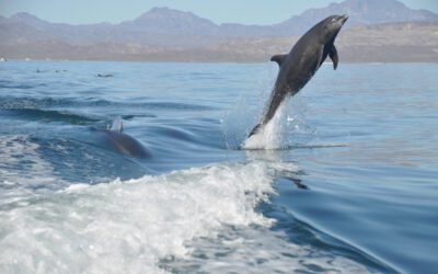 Delfin Quickies – Lebensfreude