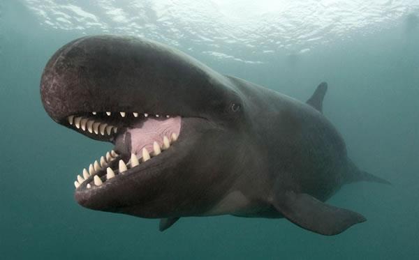 Was wollen die Wale?